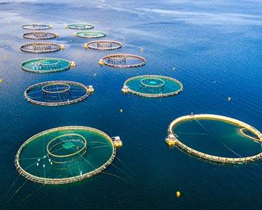 Water Quality Aquaculture